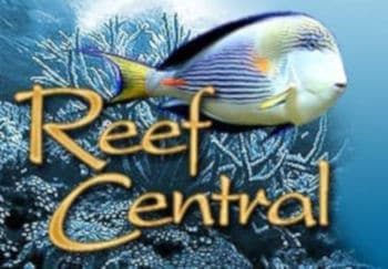 Reef Central Logo