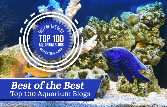 Contented Fish - Top 100 Aquariam Blogs Feature Image